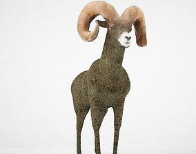 3D Bighorn Sheep