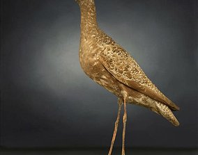Bird Photorealistic 3D model VR / AR ready 1