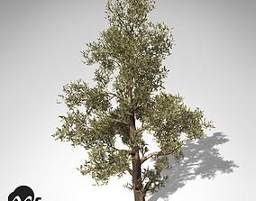 XfrogPlants Western Juniper 3D