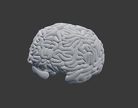 3D printable model Brain Cavity Inside