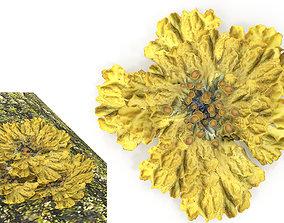 Moss lichen 3D asset