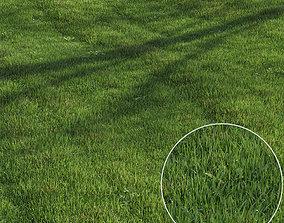 3D model green lawn