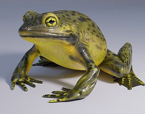 Goliath Bullfrog - Animated 3D model