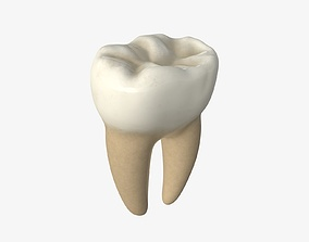 3D Tooth molars