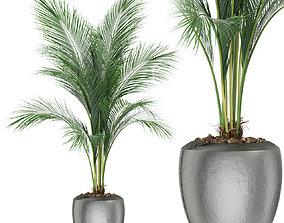 3D Plants collection 398