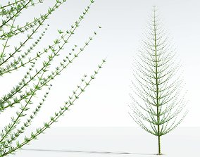 3D EVERYPlant Spiral Horsetail Tree 12 --12 Models--