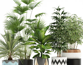 Plants collection 113 3D
