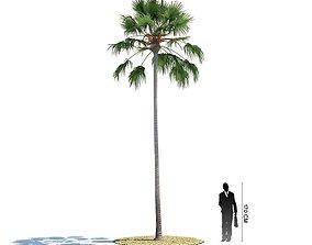 Tall Palm Tree 3D