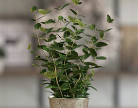 Potted Mint 3D