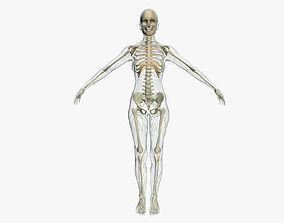 Lymphatic System with Skeleton Female 3DSmax