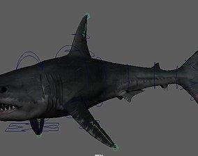 Shark 3D animated