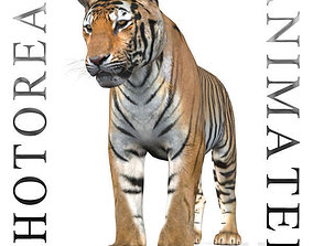 The Ultimate CGI Tiger - no fur 3d animated