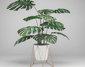 Monstera 3D model leaf