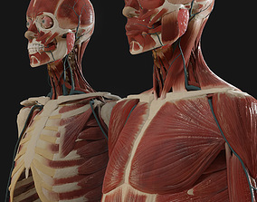 3D model Anatomy 2019