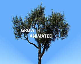3D American Chestnut Tree 001 - Growth Animated