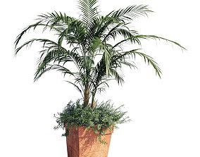 3D Kentia palm