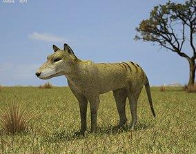 3D model Thylacine Thylacinus cynocephalus