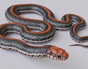 Animated Black Orange Snake 3D asset