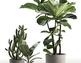 3D Cactus and Ficus in Pots