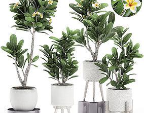 Decorative plumeria trees for the interior in 3D model 2
