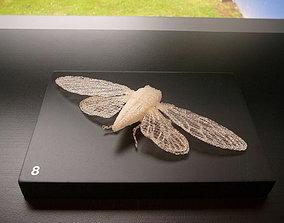 3D print model Cicada