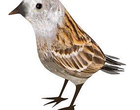 oriole Sparrow 3D