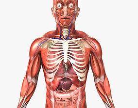 3D Rigged - Human Male Anatomy