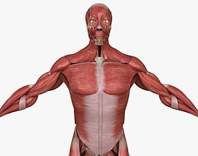 Full Human Muscle Anatomy Medical 3D model