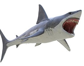 Great White Shark 3D model marine