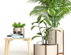 Plant set monstera 3D