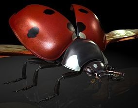 Insect Collection13 ladybug 3D model
