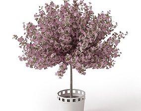 Pink Tree In A Pot 3D model