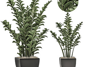 Zamioculcas in pots on a stand for the interior 3D model
