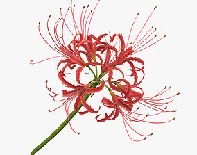 Red Spider Lily 3D