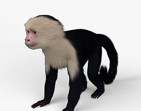 3D model Capuchin HD