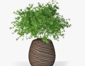 Asparagus 02 3D model