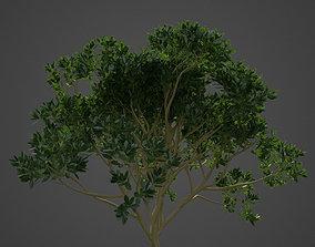 2021 PBR Asiatic Mangrove Collection - Rhizophora 3D model