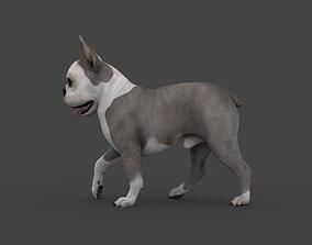 UVWD-005 Dog Textures Only 3D model