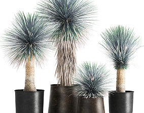 3D model Yucca rostrata in a flowerpot for the interior