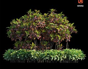 Croton plant set 07 3D model nature