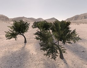 3D model Trees low poly