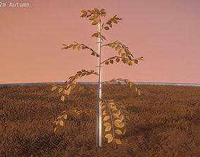3D model Plum Tree 2m Autumn Season