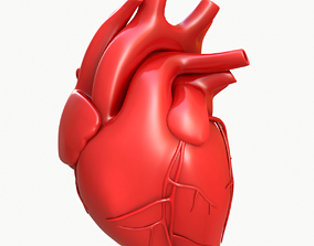 3D model Human Heart ventricle