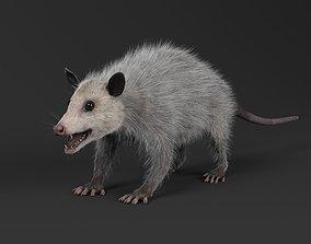 Opossum 3D