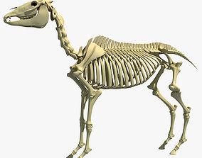 Horse Skeleton 3D model