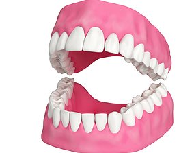 character Human Teeth and Gums 3D Model