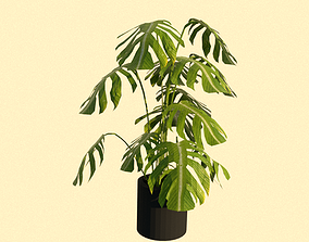 tree 3D model houseplant