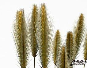 3D model Wheat