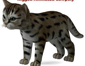 3D model Cat Tigre
