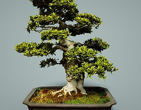 Bonsai Tree tree 3D model low-poly
